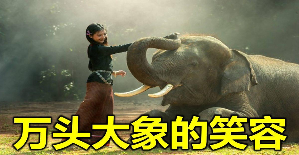 万头大象的笑容