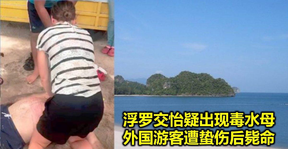 浮罗交怡疑出现毒水母 外国游客遭蛰伤后毙命