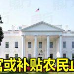 白宫或补贴农民止痛