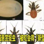 广州全城悬赏捉虫  被咬会得「新型爱滋病」