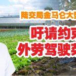 陆交局金马仑大型执法 吁请约束外劳驾驶菜车
